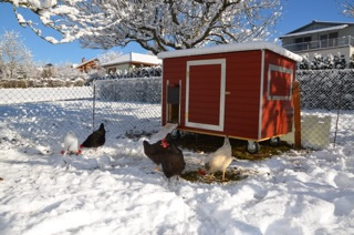 Hühnerstall Referenz 07