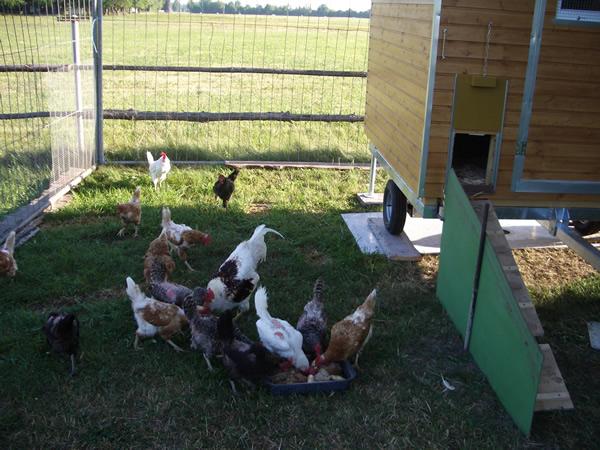 Hühnerstall Referenz 28