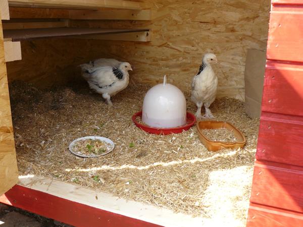Hühnerstall Referenz 11
