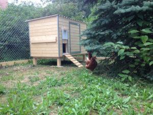 Hühnerstall Referenz 19