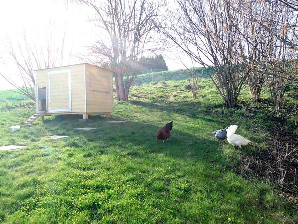 Hühnerstall Referenz 12
