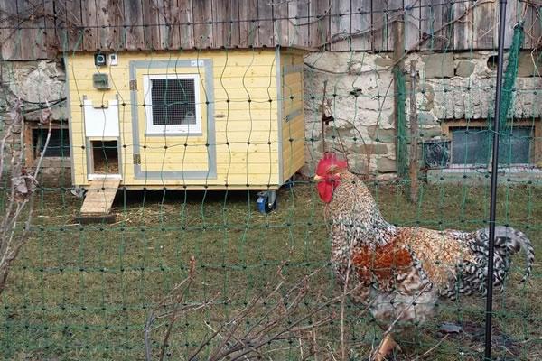 Hühnerstall Referenz 25
