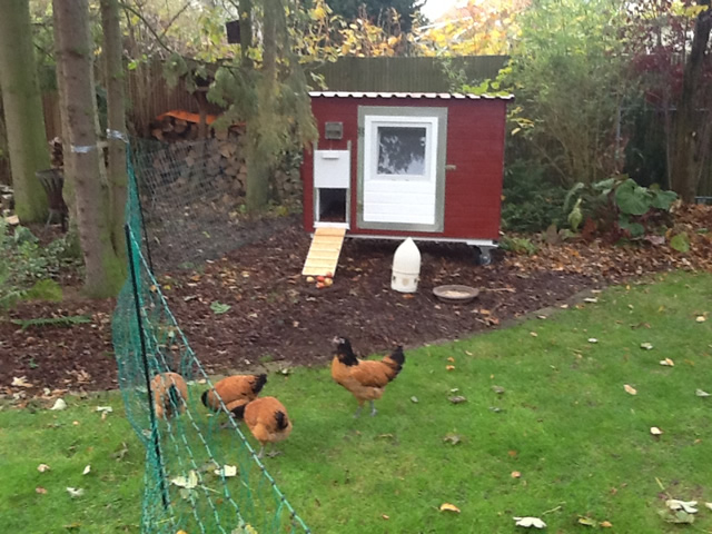 Hühnerstall Referenz 24